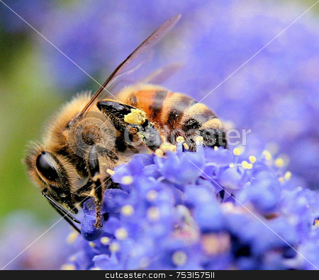 Bumble bee on purple flower stock photo, A macro of a bee on a flower. by Lucy Clark