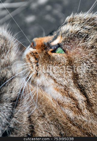 Cat in Profile stock photo, A photograph of a beautiful cat from the side, with a paw, whiskers and vivid green eyes on show by Philippa Willitts