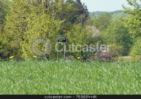 Young wheat stock photo, Field of young wheat on sunny day. Similar to grass. by Joanna Szycik