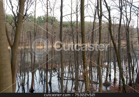 Swamp stock photo, Swamp in the spring forest somewhere in Poland by Joanna Szycik