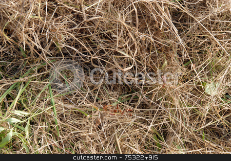 Grass stock photo, Close up of brown dry grass in a summer drought by Joanna Szycik