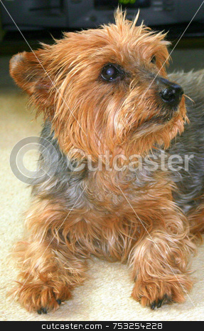 Cute Dog stock photo, A cute dog posing for the camera. by Lucy Clark