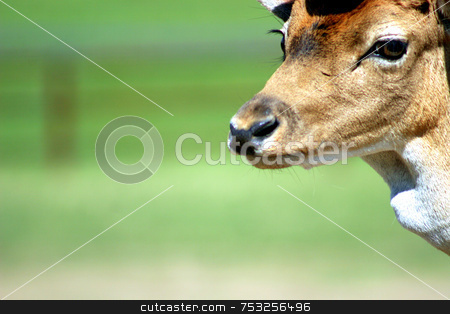Deer stock photo, A deer's face up in the corner. by Lucy Clark