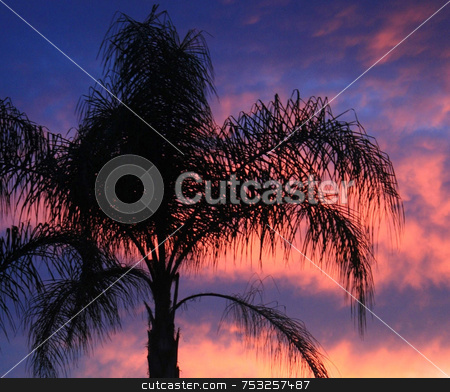 Palm Tree at Sunset stock photo, A palm tree in sunset in Florida. by Lucy Clark