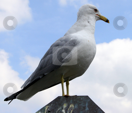 Seagull stock photo, A seagull standing on a rock by Lucy Clark