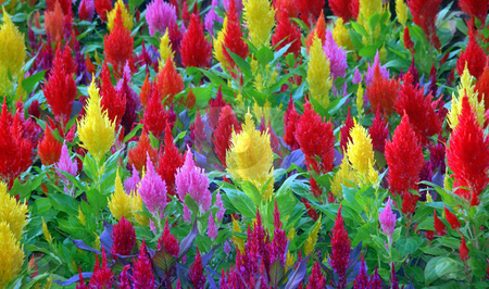 A Bloom Of Color stock photo, A bunch of colorful flowers yellow red and pink. by Lucy Clark