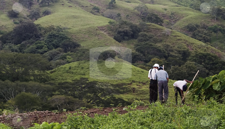 Bean Farmers on a Hillside. stock photo, Three bean farmes in a wide vista from Costa Rica. by Scott Griessel