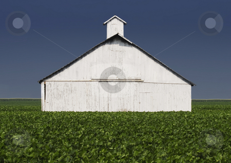 Farm Buildings stock photo, Whitewashed farm building with a leafy crop in the forground. by Scott Griessel
