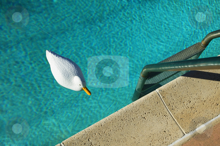 Swimming Pool with Plastic Duck stock photo, Plastic duck floating in a swimming pool with tiny ripples. by Scott Griessel