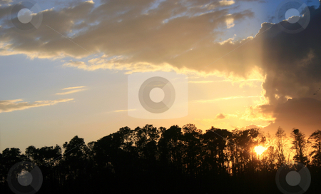 Gold Sunset stock photo, Silhouette of trees in a golden sunset by Lucy Clark