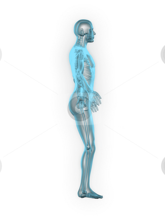 X-ray of man 3d side view blue stock photo, X-ray of man 3d side view blue on white background by John Teeter