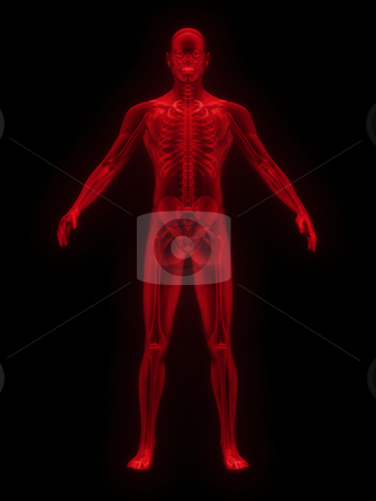 X-ray of man red front view  stock photo, X-ray of man red. front view on black background by John Teeter