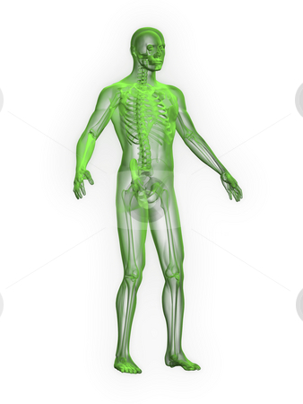 X-ray of man green front side view stock photo, X-ray of man green front side view on white background by John Teeter