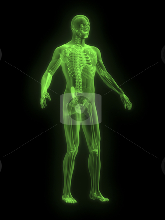 X-ray of man green front  stock photo, X-ray of man green front side view by John Teeter