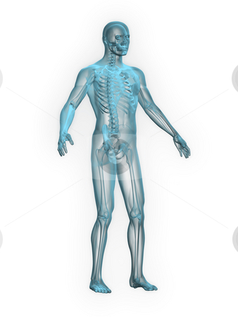 X-ray of man blue front side view stock photo, X-ray of man blue front side view white background by John Teeter