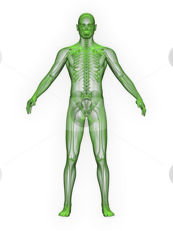 X-ray of man green. front view stock photo, X-ray of man green. front view on white background by John Teeter