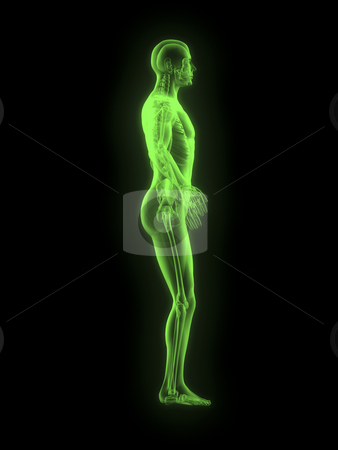X-ray of man 3D side view green stock photo, X-ray of man 3d side view green on black background by John Teeter