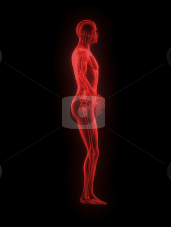X-ray of man 3d side view red on black background stock photo, X-ray of man 3d side view red on black background by John Teeter
