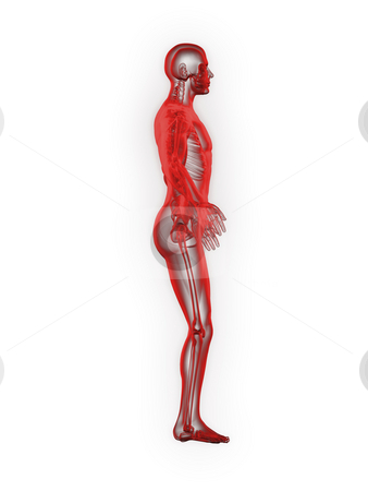 X-ray of man 3d side view red stock photo, X-ray of man 3d side view red on white background by John Teeter