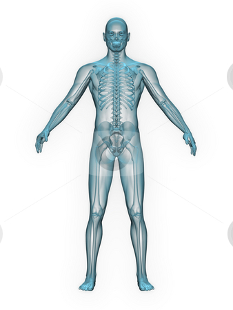 X-ray of man blue. front view. stock photo, X-ray of man blue. front view on white background by John Teeter