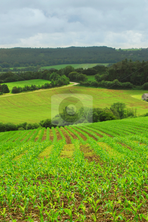 Agricultural landscape stock photo, Scenic view on agricultural landscape in rural Brittany, France. by Elena Elisseeva