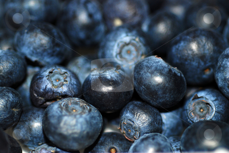 Blueberries stock photo, A close up photograph of a punnet of fresh blueberries by Philippa Willitts