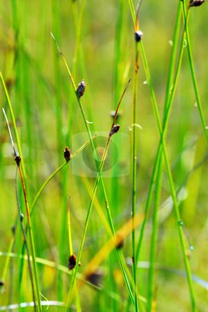 Botanical background stock photo, Botanical background of lush green plants and grass by Elena Elisseeva