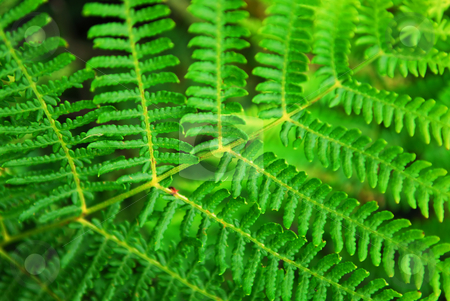 Fern leaf stock photo, Closeup on a green leaf of a fern growing in woodland by Elena Elisseeva