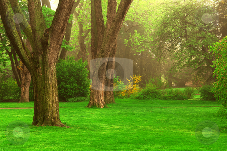 Foggy park stock photo, Old trees in the spring foggy park by Elena Elisseeva