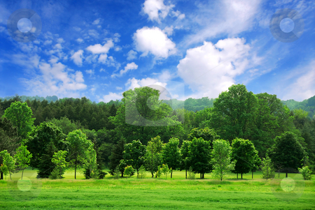 Green forest with blue sky stock photo, Summer landscape of young green forest with bright blue sky by Elena Elisseeva