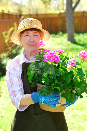 Retired gardener stock photo, Senior woman holding a pot with flowers in her garden, shallow dof, focus on flowers by Elena Elisseeva