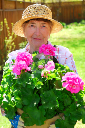 Senior woman gardening stock photo, Smiling senior woman holding a pot with flowers in her garden by Elena Elisseeva