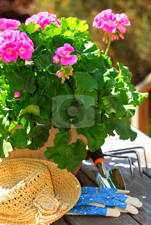 Gardening tools stock photo, Pot of geraniums flowers with gardening tools by Elena Elisseeva