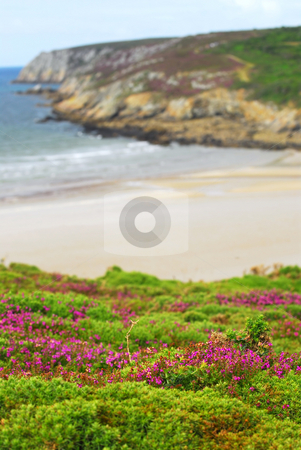 Atlantic coast in Brittany stock photo, Heather blooming at Atlantic ocean coast in Brittany, France by Elena Elisseeva