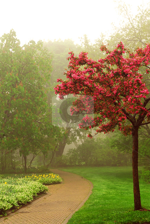 Foggy park stock photo, Path in a green foggy park in the spring with blooming apple tree by Elena Elisseeva