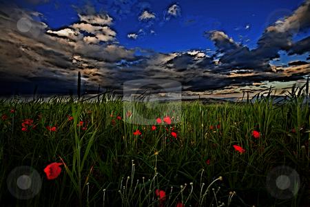 ... a windy field stock photo,  by emiliano beltrani