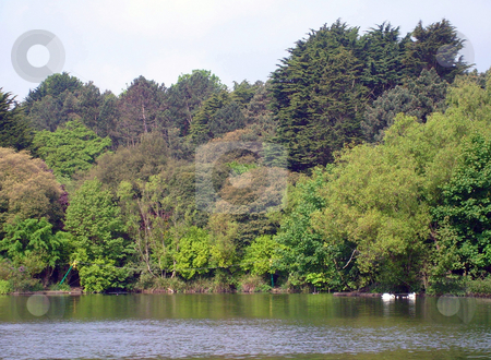 Scenery of peaceful lake stock photo, Scenery of peaceful lake, Scarborough, England. by Martin Crowdy
