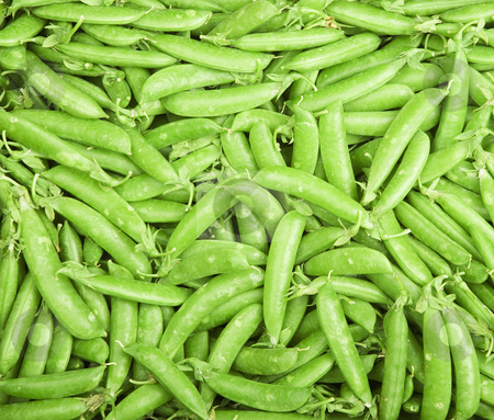 Peas in Pods stock photo, Frame filled with bright green pea pods by Scott Griessel