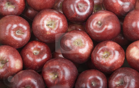 Deep Red Fresh Picked Organic Apples stock photo, Red Fresh Picked Apples Fill the Frame by Scott Griessel