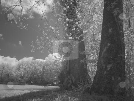 Infra Light stock photo,  by John Adair