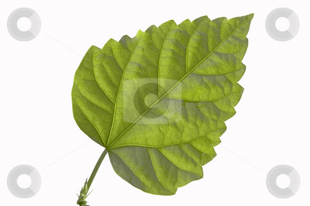 Green sheet. stock photo, Close up of a green sheet on a white background. by Yury Ponomarev