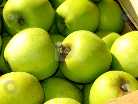 Green apples stock photo,  by Wolfgang Heidasch