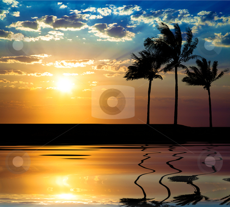 Beautiful sunet with palm tree at summer time stock photo, Beautiful sunet with palm tree at summer time by tomwang