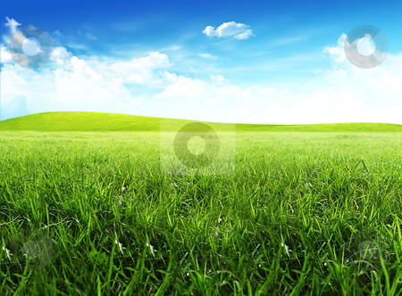 Field of grass and perfect blue sky  stock photo, field of grass and perfect blue sky by rufous