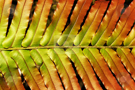 Native fern stock photo, Detailed view of fern fronds from the New Zealand forests by josefstuefer