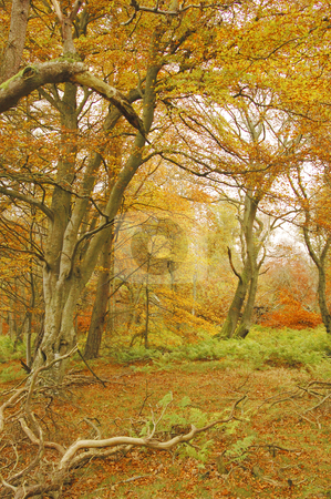 Autumn colours stock photo, wooded area with autumn colours of orange green and yellows by Denovan