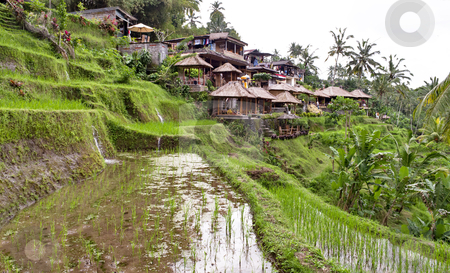 Indonesian rural village stock photo, Indonesian rural village with rice plantation by Alberto Rigamonti