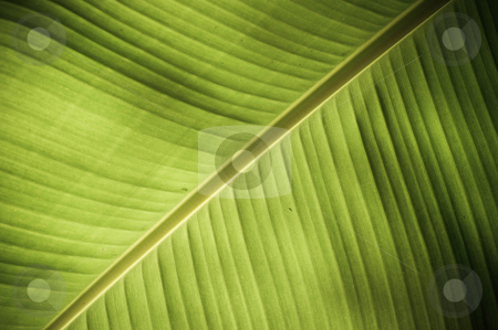 Texture stock photo, Intricate texture revealed in a fresh green leaf by Arvind Balaraman