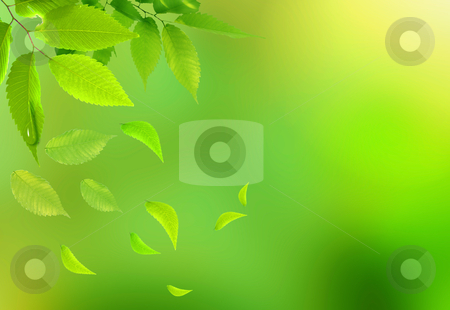 Bright green leaves on the branches in the autumn forest stock photo, Bright green leaves on the branches in the autumn forest by rufous