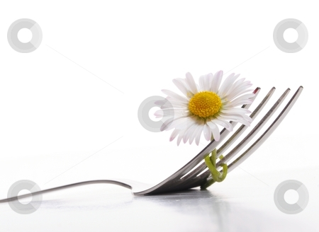 Flower and fork stock photo, flower and fork isolated on a white background with copyspace showing food concept by Gunnar Pippel